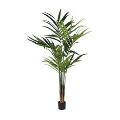 Tall Faux Kentia Palm from The Farthing