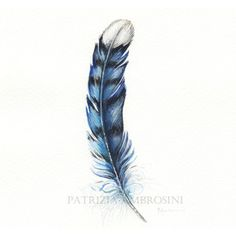 Original 7x9 Watercolour Feather No.10. NOT A PRINT ..Original Painting -fine art- blue jay - bird - feather study