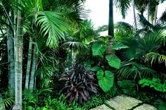 Urban Garden Design Change Your Garden With Tropical Landscape Design You'll Love 47 - Change Your Garden With Tropical Landscape Design You'll Love 47 Tropical Garden Design, Tropical Backyard, Tropical Landscaping, Landscaping With Rocks, Modern Landscaping, Tropical Plants, Backyard Landscaping, Landscaping Ideas, Tropical Gardens