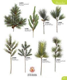 Vintage Evergreen Trees Pine Cones Of North America