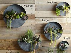 Round metal planters perfect for growing succulents, air plants, etc.