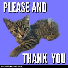 Thank you ​memes can be fun! These nice safe for work thank you memes can be a quick way to express your gratitude. And the cats are cute! Thank You Cat Meme, Funny Thank You, 31 Day Challenge, Writing Challenge, Email Subject Lines, Please And Thank You, Safe For Work, Cat Memes, 31 Days