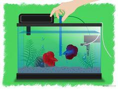 The Easiest Way to Breed Betta Fish - wikiHow Breeding Betta Fish, Betta Fish Care, Siamese Fighting Fish, Aquarium Fish, Pets, Crafts, Animals, Image, Kid