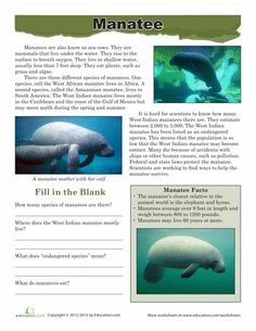 Ancient mariners mistook the manatee for a mermaid! Your young biologist won't make the same mistake after learning about the manatee with this worksheet. Science Resources, Teaching Science, Life Science, Science Curriculum, Science Fun, Manatee Facts, Ocean Lesson Plans, Swimming With Manatees, Hedgehog Craft