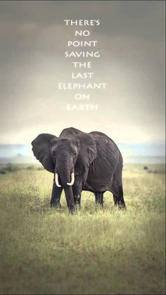 Thre's no point saving the last elephant on earth