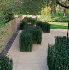 Architectural plantings within the hardscape
