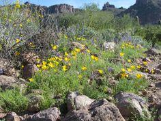 wild flowers in desert