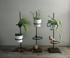 Image result for indoor plant plinth
