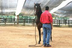 Postura tensa, caballo tenso