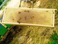 #BeeHappyDSP