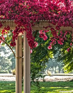 bougainvillea picture, by Remsphoto for: vines photography contest . Beautiful Landscapes, Beautiful Gardens, Beautiful Flowers, Bougainvillea, Arbors Trellis, Climbing Vines, Photography Contests, Flowering Vines, Garden Structures
