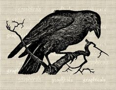 Crow download from graphicals on Etsy.