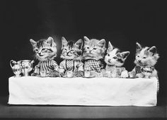 Harry Whittier Frees Was Photographing Cute Animals In Weird Costumes Long Before We Were - Dinner Party