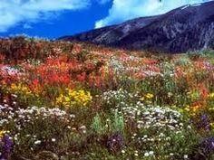 The Dirty Gardener Mountain Wildflower Seed Mix, 1 Pound