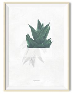 Cactus 03 - A3 poster - Another Poster Shop