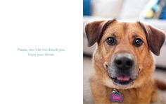 Image taken from Waggish: Dogs Smiling for Dog Reasons by Grace Chon & Melanie Monteiro