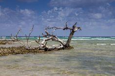 Photo by Ivana Piskáčková Daily Photo, The World's Greatest, Driftwood, More Fun, Coast, Ocean, Landscape, Awesome, Beach