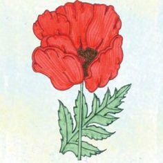 American Legion - Poppy