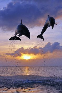 jumping dolphins photography sunset beautiful ocean water clouds dolphins