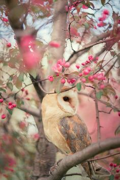 Barn owl in a tree #Birds #Owls Nature and animal photography