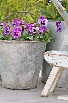 spring bucket full of pansies
