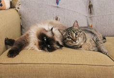 Goma and Kuma just chillin'.