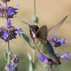 Photograph Hummingbird by Jill Travis on 500px