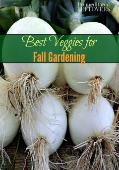 The best vegetables to grow in our gardens this fall and a list of vegetables that you can grow from seed in your fall garden and which vegetables are best  started from transplants.