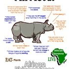 """This """"All About Book"""" will be a fun addition to your classroom and lesson on the rhinoceroses. (African Animals Unit Study)  Your student/child will love to learn """"All About Rhinoceroses""""!"""