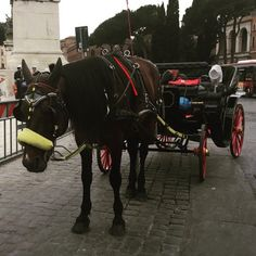 This Sad Image of a Horse and Buggy Reminds us There is No Need to Use These Animals for Transportation
