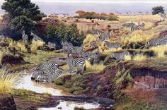 [EndLiss scans - Wildlife Art] Al Agnew - You Can Lead a Zebra