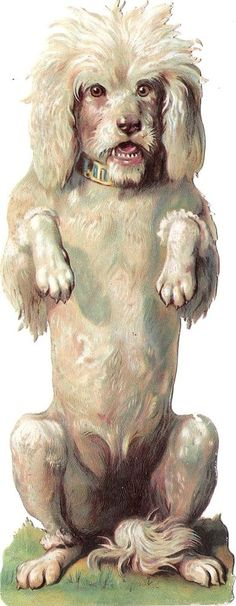 Oblaten Glanzbild scrap die cut chromo Hund dog XL 18,5 cm  Pudel poodle