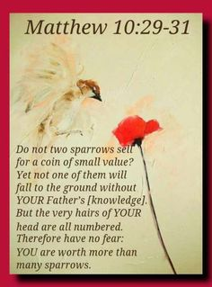 Matthew 10:29-31  You are worth more than many sparrows.