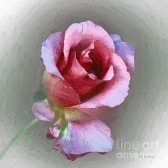 """Silk and Satin"" ~ © 2012 RC deWinter ~ All Rights Reserved Soft Pastel Art, Pastel Artwork, Pastel Flowers, Beach Scene Painting, Stone Painting, Black Canvas Art, Acrylic Art, Landscape Art, Flower Art"