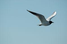 Seagull Explore, Bird, Animals, Animales, Animaux, Birds, Exploring, Animal Memes, Animal
