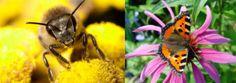 bijen en vlinders