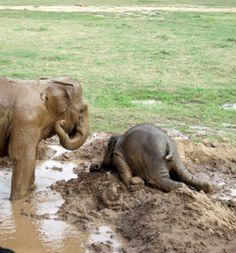 Baby elephants being kids