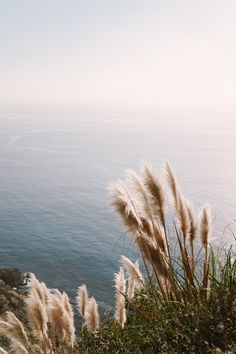 The Complete Extended Travel Guide to Big Sur, California - Bon Traveler