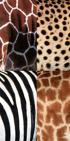 """I LOVE The Beautiful Authentic Patterns of African Animals.  Indeed ALL Living Things Have A Natural Beauty!"""