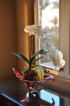 love orchids kokedama