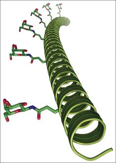 Model of an alanine-rich helical protein polymer with site-specific display of REs. The protein is readily available through recombinant expression in E. coli. The β-d-galactosylamine RE was introduced by conjugation to glutamic acid sidechains positioned at specific sites within the helix [51••]. Figure prepared using PyMol (http://www.pymol.org).