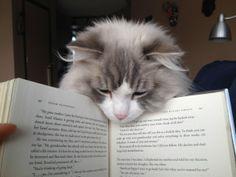whatcha reading??
