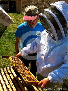 Inspecting A Langstroth Bee Hive Editorial Stock Image - Image of domestic, honey: 74696904 Beekeeping, Permaculture, Editorial, Image, Accounting