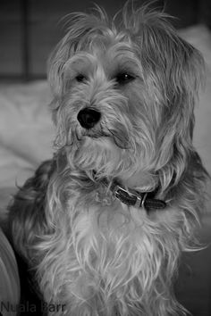 Photo by nualabarr Dogs, Animals, Animales, Animaux, Pet Dogs, Doggies, Animal, Animais