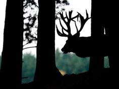 Nein zu Rotwildjagd in Nationalpark-Kernzonen