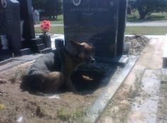 """""""But, the dog did have a reason.. She was harboring four puppies and decided that underneath this grave would give them the best shot of being warm and safe."""""""