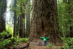 Boy hugging tree trunk, Redwoods National Park, California. - Julia Kuskin/Cultura RM/Getty Images