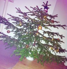 My own little christmas tree