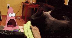 Find GIFs with the latest and newest hashtags! Search, discover and share your favorite Black Cats GIFs. The best GIFs are on GIPHY. Funny Cat Videos, Funny Memes, Hilarious, Funny Gifs, Patrick Star, Funny Patrick, Les Gifs, Seriously Funny, Tumblr