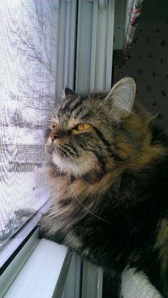 I'm getting sleepy waiting for birdies.